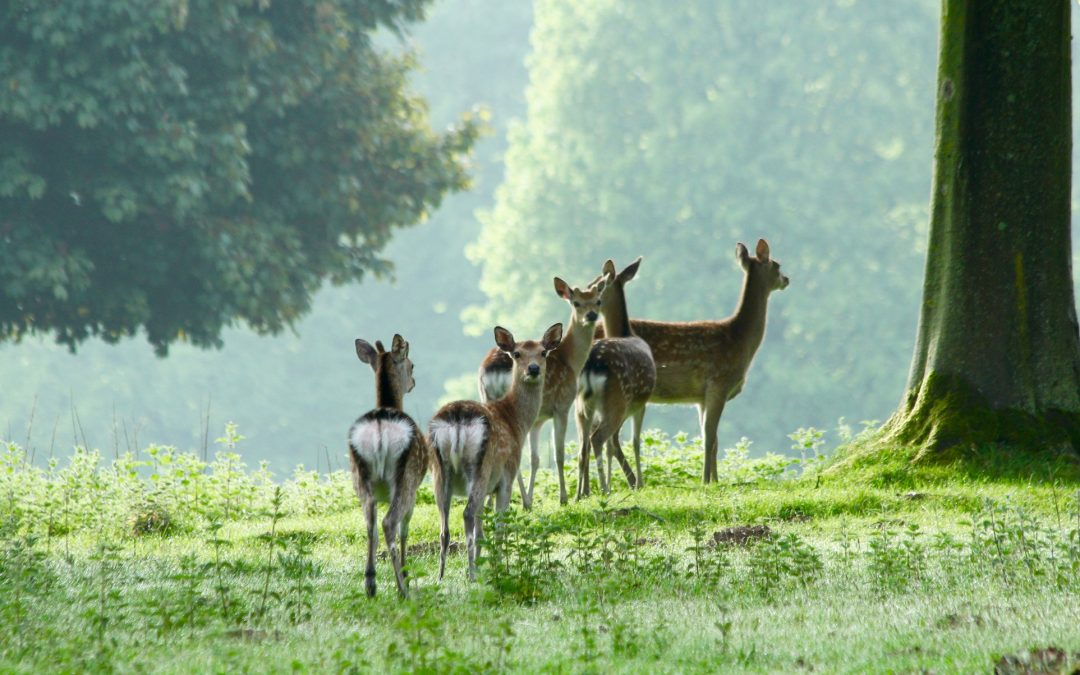 Are All Deer Bad News?